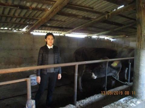 photo of Gulum