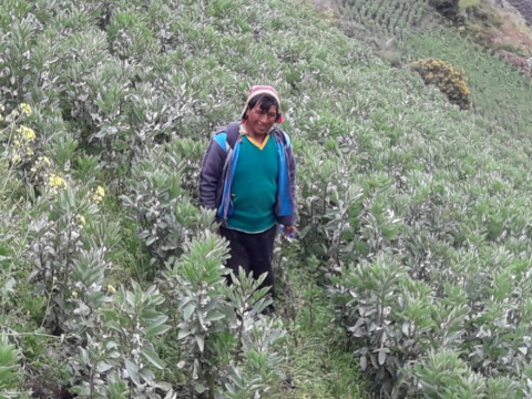 photo of Basilio